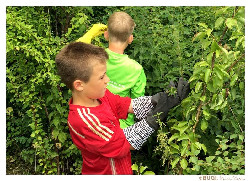 Drenge plukker brændenælder